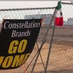 Aprueba IEEBC continuar con el análisis de la solicitud de plebiscito contra la Constellation Brands