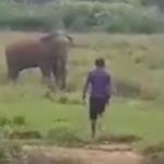 Elefante pisotea a un hombre que intentaba hipnotizarle