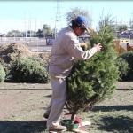 Sigue a la baja acopio de pinos navideños naturales en Mexicali