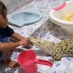 Niña le cepilla los dientes a un cocodrilo y se hace viral