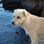 Salva perrito a gallina de morir ahogada