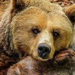 Cae oso a barranco por evitar ser apedreado en la India