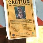 Ataca puma a niño de 4 años en la reserva natural de San Diego