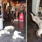 Tienda dejó entrar a perros callejeros para protegerse del calor