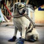 Se retira Frida, la perrita rescatista, y le hacen homenaje