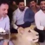 Estrellan pastel de cumpleaños en la cara de un león