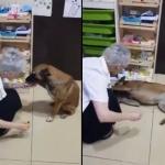 Perrito lastimado pide ayuda en una farmacia y se hace viral