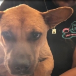 Denuncian a hombre por abuso animal en Mexicali