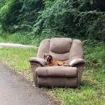 Perro abandonado en un sillón no se movía durante días