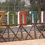De 50 a 70 animales han muerto durante la administración en el Parque Morelos: Comerciantes