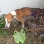 Queman perro con asfalto hirviendo; y se escondió para poder morir solo