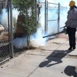 Preocupa al sector salud la creciente población de mosquitos en Baja California