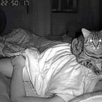 Descubre que su gato lo asfixia mientras duerme