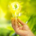 Universitarios de la UAM utilizaron las plantas para generar energía eléctrica