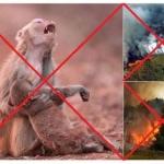 Circulan falsas imágenes del incendio en el Amazonas