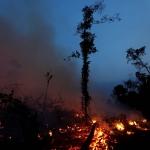 Crece 91% deforestación del Amazonas en Brasil