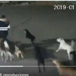 11 perros contra una mujer, sospecha principal de muerte
