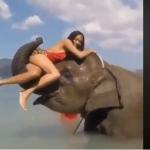 Elefante lanza a mujer por el aire y se hace viral
