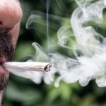 ¿Te gusta la marihuana? Empresa paga $57 mil al mes por fumar