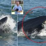 Ballena se traga a buzo y lo regresa vivo en playa de Sudáfrica