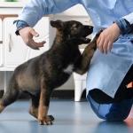 Kunxun, el primer perro policía clonado en China