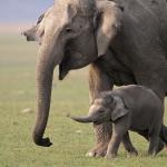 Descubren elefante color rosa en Sudáfrica