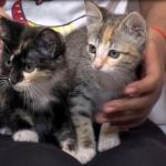 Disfruta con tu mascota de Baja Cat Fest