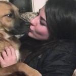 Disputa pareja la custodia de su perro en la Corte Suprema de Maine