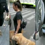 Perros fueron detenidos, ¡por jugar en una fuente!