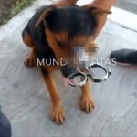 Perro callejero fue agredido con tijeras en el Estado de México