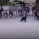 """""""Chango"""" se intenta fugar del zoológico y patea a un guardia"""