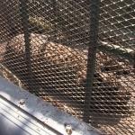 Atrapan leopardo en pleno bulevar Agua Caliente