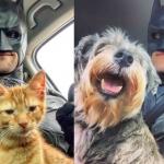 Batman4Paws: El caballero de la noche en favor de los animales sin hogar