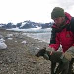 Viaja zorro ártico de Noruega a Canadá en 76 días