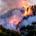 Incendios forestales en Brasil superan los 70 mil en el año