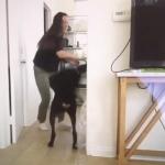 Denuncian a youtuber por grabarse accidentalmente maltratando a su perro