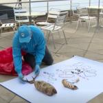 Hallan restos de animales usados para brujería en Colombia