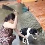 """De un machetazo le corta la pata a su perra, por """"mal comportamiento"""""""