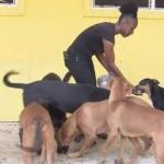 Mueren 220 perros y 50 gatos en inundaciones por huracán Dorian en Bahamas