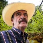 Vicente Fox podría participar en regulación de marihuana: Mario Delgado