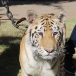 Reducirán población de animales en el Zoológico de Mexicali