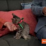 La importancia de la adopción de gatitos