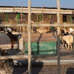 Envenenan a más de 20 perros callejeros con comida en Atempan, Puebla