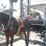 Podrían dar marcha atrás a la prohibición de caballos en calandrias