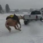 Acusan a pareja de maltrato animal tras arrastrar a caballo atado a una camioneta