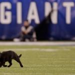 Gato negro se roba el show en partido de la NFL