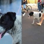 Crean falsa marcha para llevar a perrito al veterinario